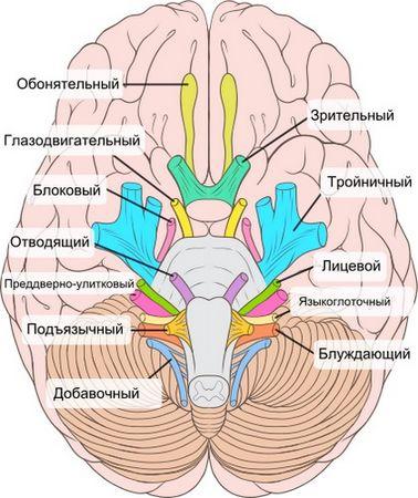 Карта черепных нервов