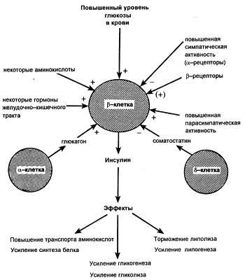 Регуляция продукции инсулина