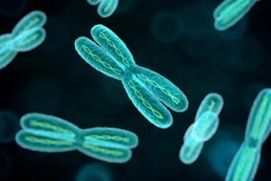 Генетическая предрасположенность и наследственность