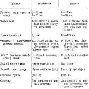 Важнейшие морфологические отличия анкилостомы и некатора