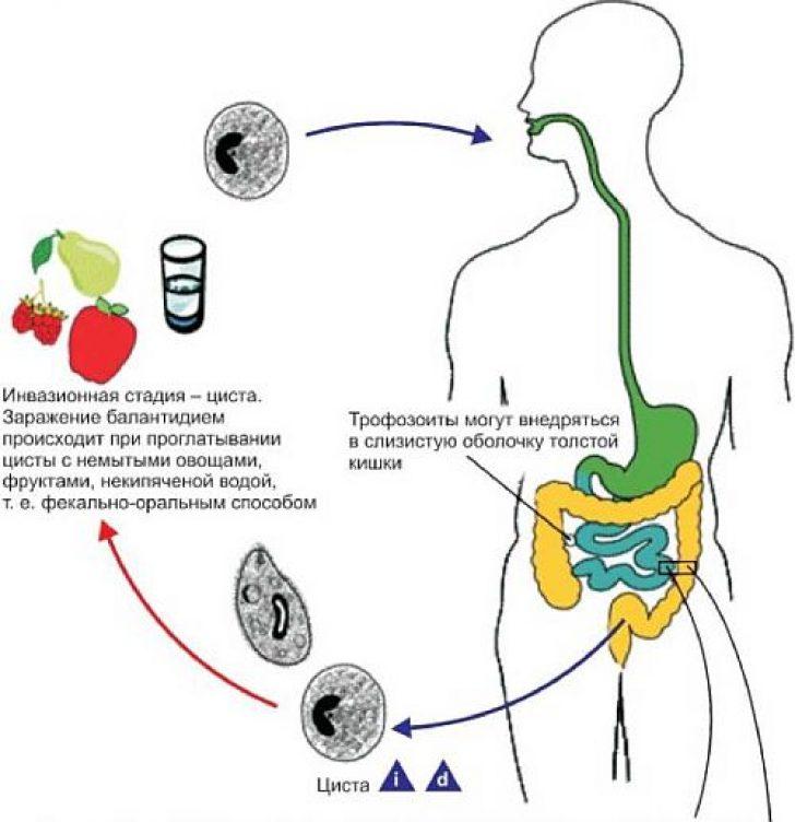 Как паразит проникает в организм человека