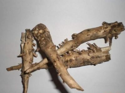 Как выбрать правильный корень подсолнуха