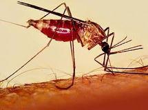 Как заражаются малярией - причины, диагностика, лечение и профилактика