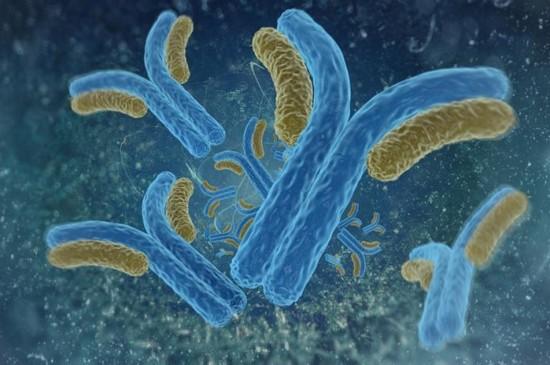 Антитела - причина гемолитической анемии при системной красной волчанке