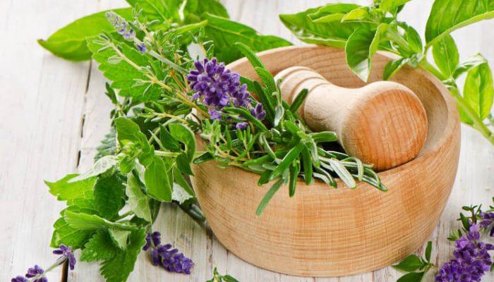 Травы для укрепления и роста волос в домашних условиях