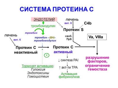 Схема системы протеина С