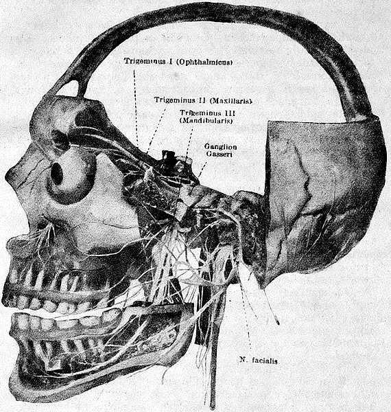Точки выхода тройничного нерва