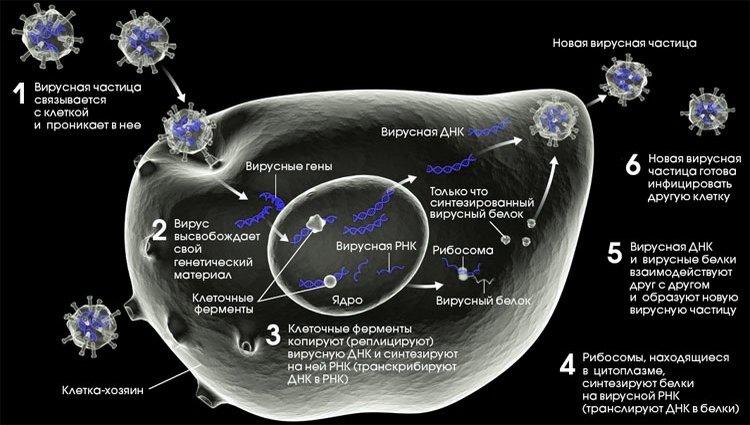 Схема патогенеза ВИЧ-инфекции