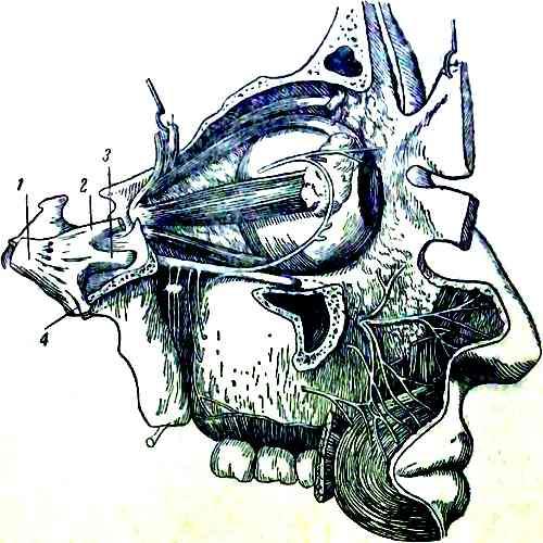 Тройничный нерв и его ветви
