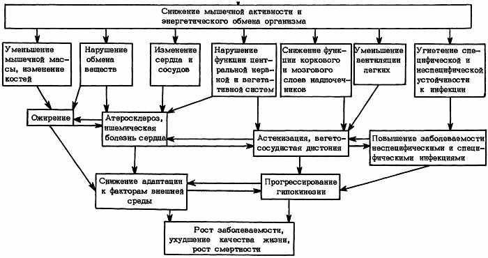 Механизмы формирования и последствия гиподинамии