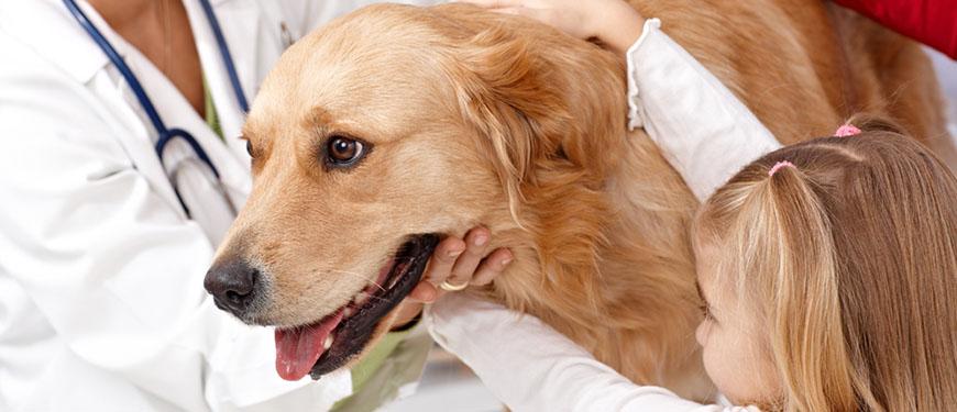 глисты в сердце у собак