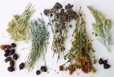 Целесообразность использования трав при лечении цистита